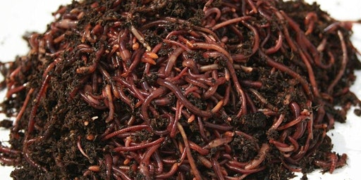 Beginners Guide to Vermicomposting