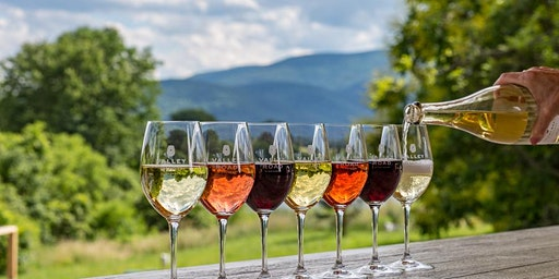 Exploring the Wine Tasting Experience