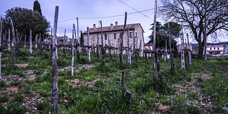 UMBRIA: Wines, Culture, History with SelectioNaturel tickets