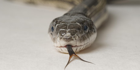 Serious Fun with Snakes tickets