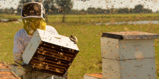 eTown Presents Green Screens at eTown Hall: The Pollinators