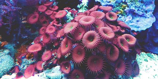 Sensory Ocean