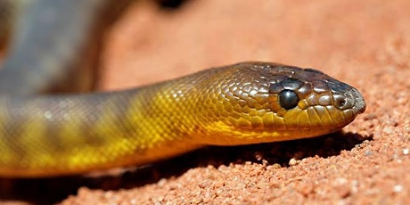School Holiday Program - Arid Recovery Snake Session tickets