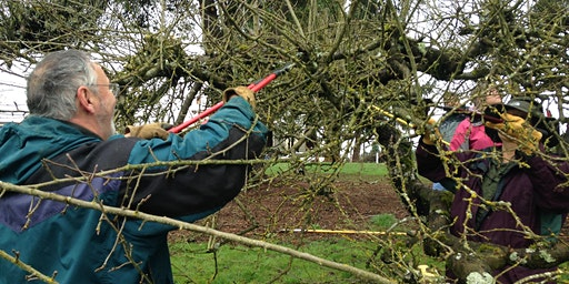 Winter Orchard Care Series: Foley Community Orchard