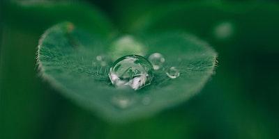 "1st Wednesdays Singing RingⓇ Healing Sound Meditation ""Embodied Living"""
