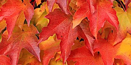 Planning your autumn garden  tickets