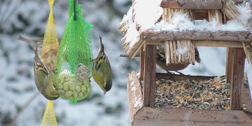 Workshop Vogels spotten en voederen