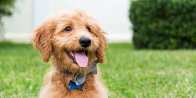 BYOD Dallas Doggie Block Pawty (FREE PUPpuccinos)