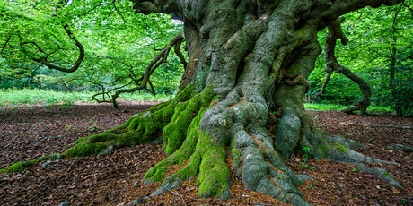 Epping Forest in Spring tickets