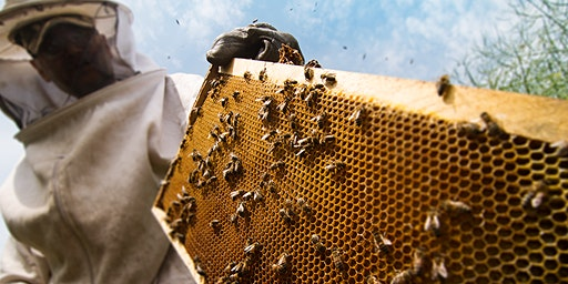 A Buzz in the Black Hills: 1st Annual WDT & DRB Beekeeping Conference