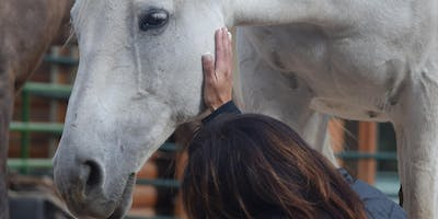 Next Bold Move Equine Vision Journey Retreat - Aug 2020