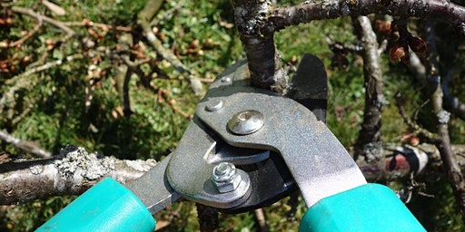 Dormant Pruning Workshop