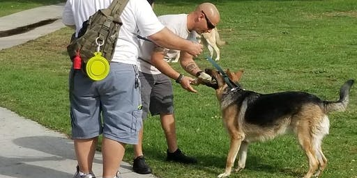 A Veteran's Objective Dog Training Program