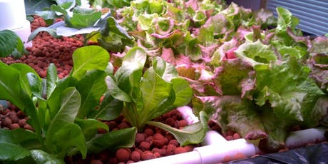 Lunch + Learn: Surviving and Thriving with Hydroponics tickets
