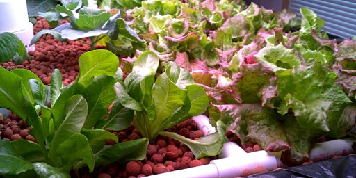 Lunch + Learn: Surviving and Thriving with Hydroponics