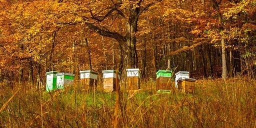 2020 Beginner Beekeeping Class