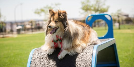 Stockland Cloverton Dog Park Launch 2019
