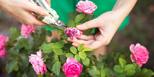 Better Garden: Planting and Pruning