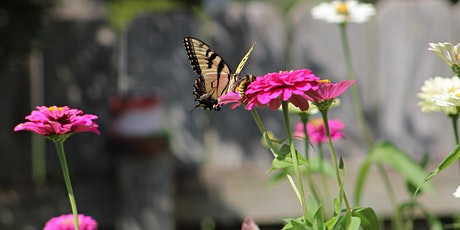 Insects and Pollinators Workshop tickets