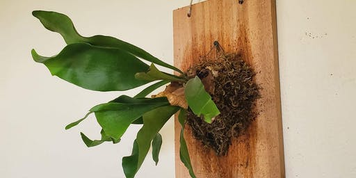 Staghorn Fern Mounting Class