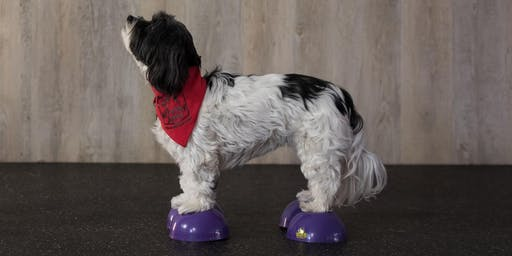 Canine Only Fitness Class (6-weeks)
