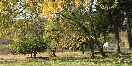 Winter Orchard Care Series: Curtin Spring Community Orchard