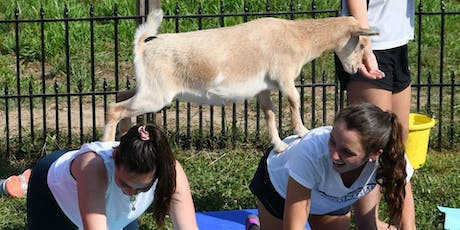 Sat 12/7- 10am: Baby Goat Yoga Bahhmaste Class and Goat Snuggles at the Far tickets