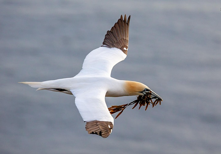Seabirds, Songbirds, Seascapes and Whales of Avalon Newfoundland image
