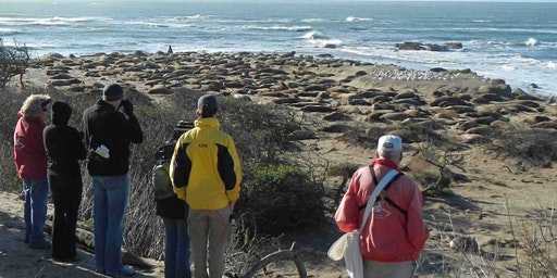 Waddell Beach Camp and Elephant Seal Tour