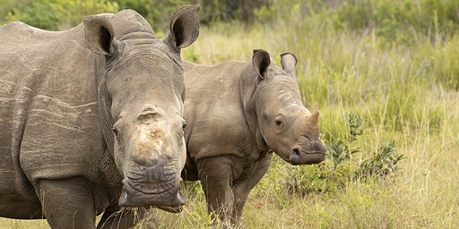 Helping Rhinos Spring Talk - Creating a Rhino Stronghold