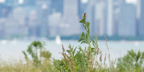 Understanding Chicago's Proposed Bird-Friendly Building Ordinance tickets