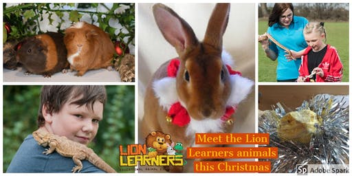 Christmas Confusion with the Lion Learners animals