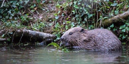 Beaver Ecology & Conservation