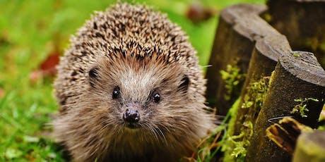 Naturehood: Hedgehog house building workshop tickets