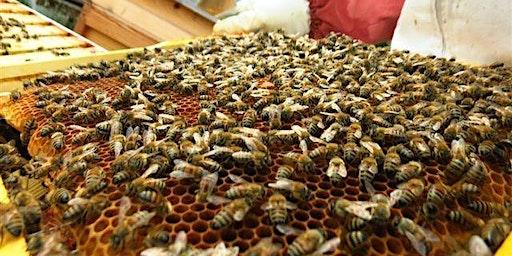 Croydon Beekeepers Beginners Course