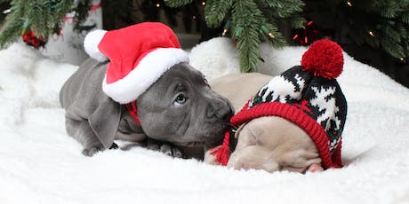 Home for the Holidays Adoption Event tickets