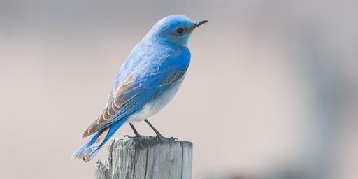 Bird Carving - Carve a Mountain Bluebird with Cam Merkle