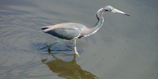 Wading Bird Walk