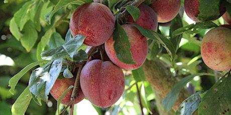 Summer Fruit Tree Pruning tickets