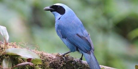 Birding in Ecuador tickets