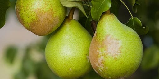 Bounty From Your Garden: Fruit Trees 101