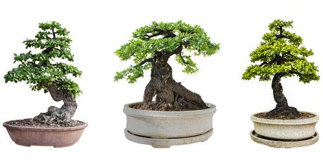 Tour of the National Bonsai & Penjing Collection tickets