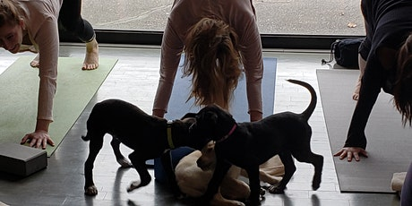 Doggy Noses & Yoga Poses - Pups and Poses at purespace! tickets