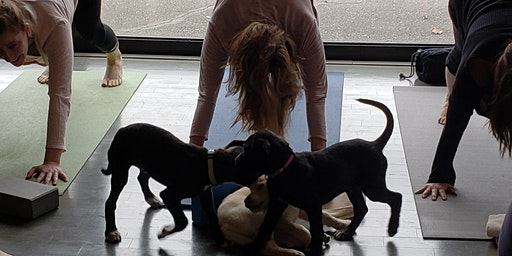 Doggy Noses & Yoga Poses - Pups and Poses at purespace!