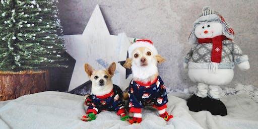 Hala's Paws Holiday Pet Portraits