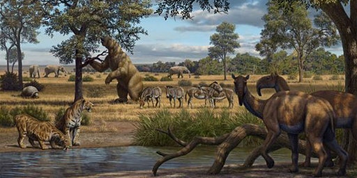 Trott Park | Giant Animal Extinctions | Light Lunches