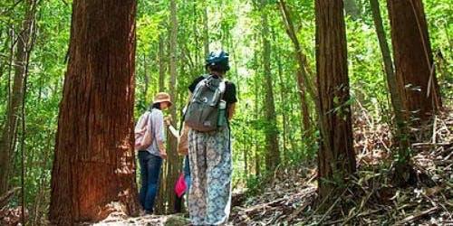 Shinrin-yoku Walk - Forest-bathing walk