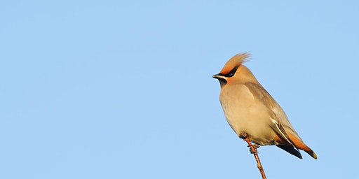 Introduction to Winter Bird ID