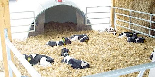 Abbattere i costi della vitellaia Expert con elementi di progettazione - Parma 12/03/2020