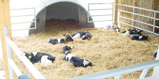 Abbattere i costi della vitellaia Expert con elementi di progettazione - Parma 05/11/2020